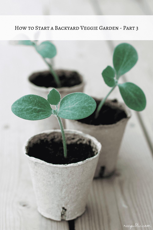 How to Start Veggie Garden – Part 2