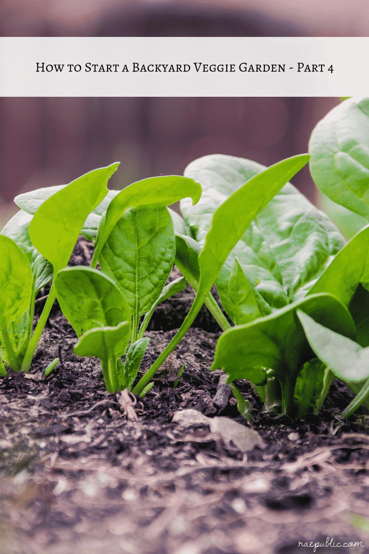 How to Start a Veggie Garden – Part 4
