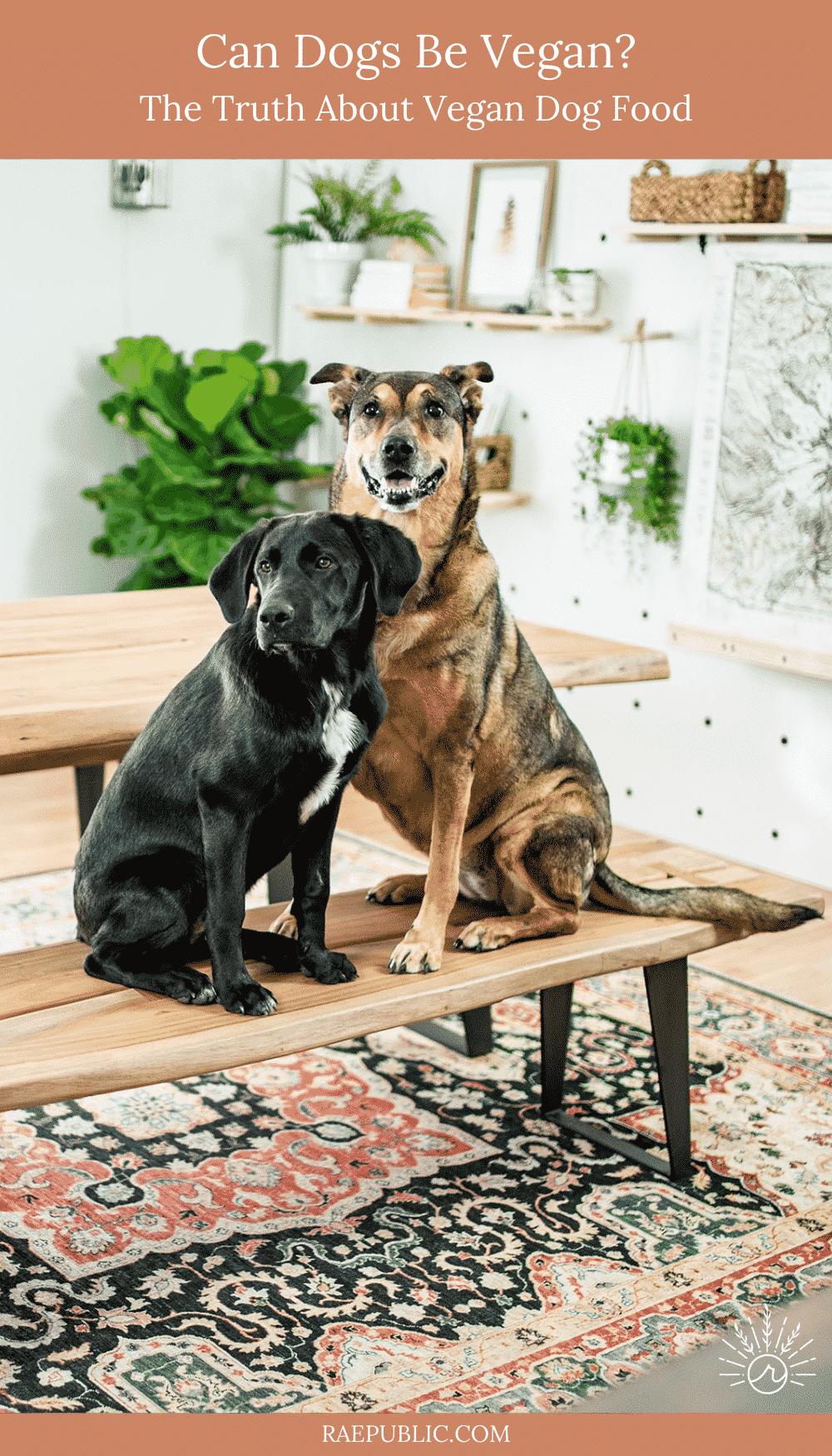 Can Dogs Be Vegan – Vegan Dog Food